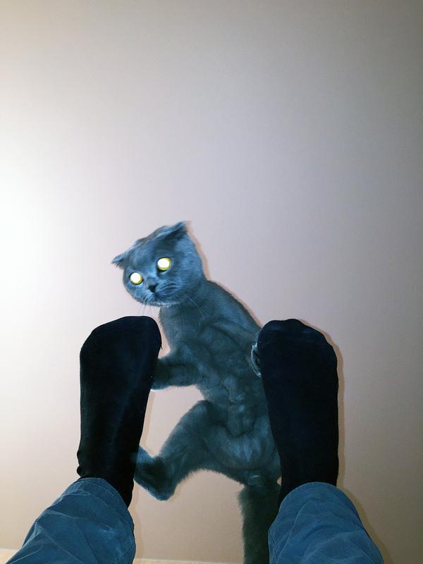 Мой котэ