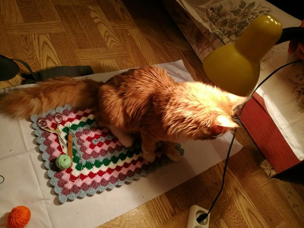 Фотосессии с котом Кот, Рыжийкотенок, Рукоделие, Вязание, Вязание свитера, Длиннопост, Фото с котами, Спящие котики