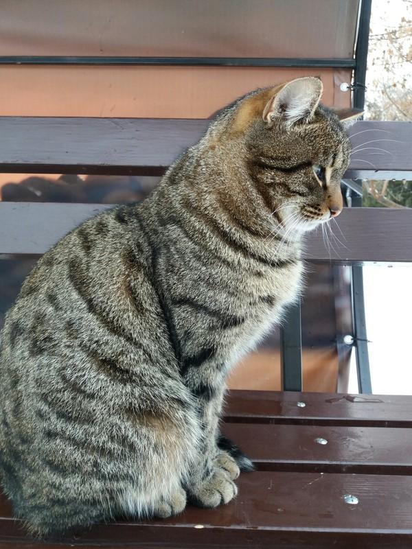 К постам про весенних котов Кот, Весна, Длиннопост