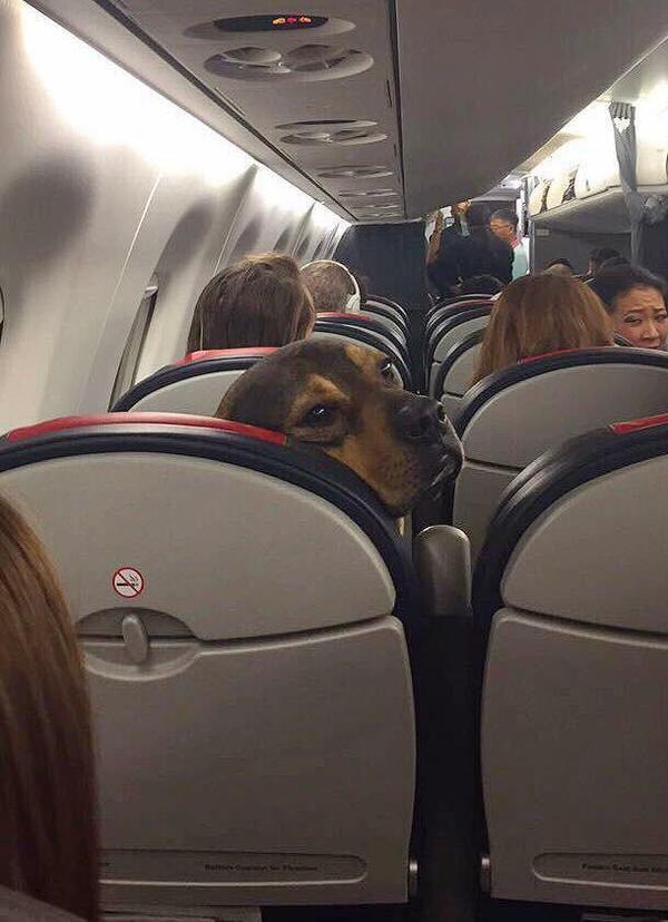 Еще раз пнешь мое кресло – нос откушу!