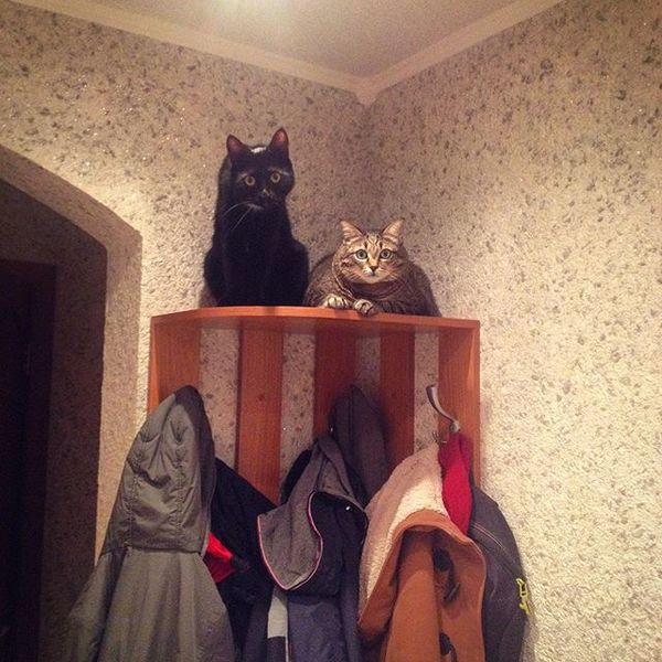 Два кота двакота, моё, кот