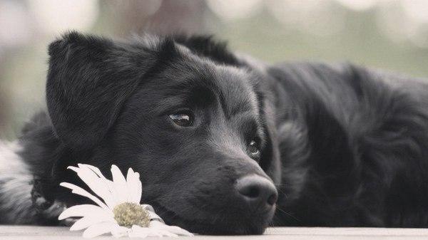 Моему человеку стихи, поэзия, собака, дружба