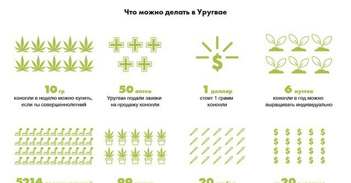 Когда разрешат легализацию конопли россии план с засохшей конопли