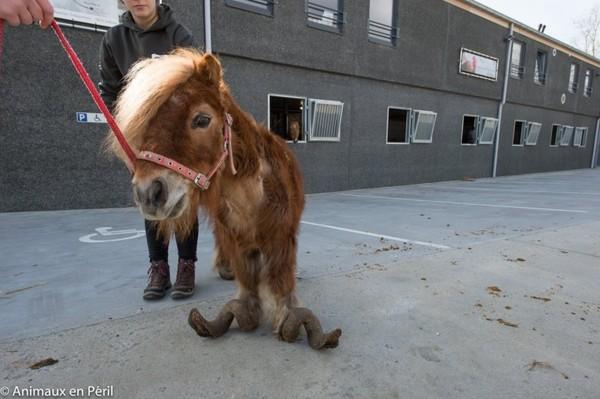 Картинки по запросу лошадь пони