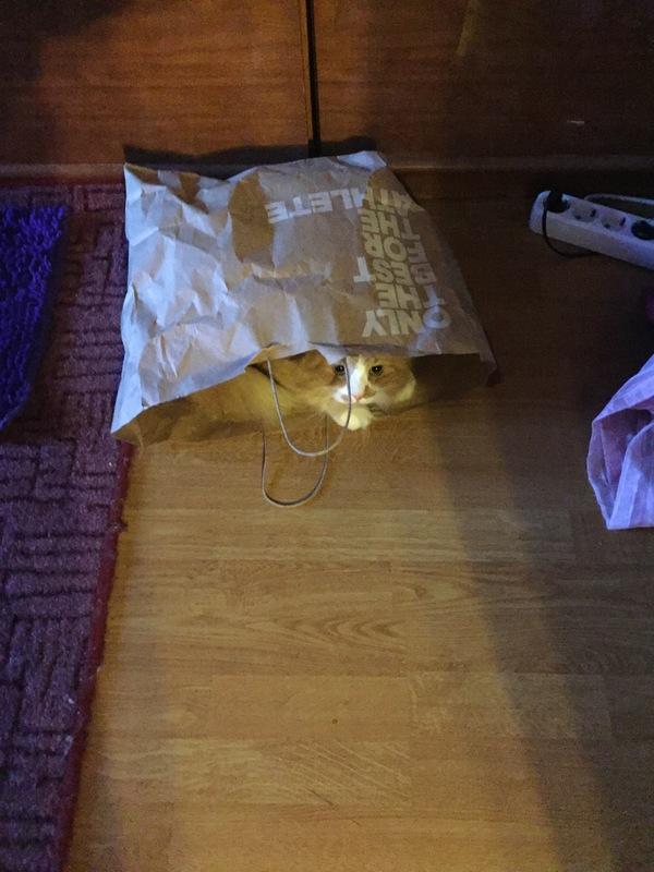 Мой кот с утра спрятался в пакет и при попытке его от туда достать,сопротивлялся)