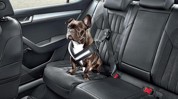 Реально нужный ремень безопасности Ремень безопасности, Собака, Машина