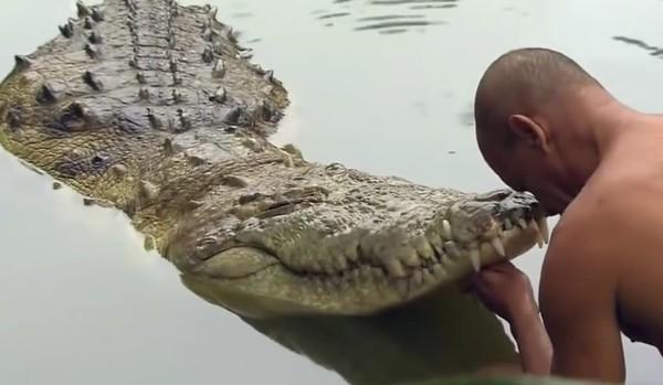 В ЮАР три брата погибли при попытке изнасиловать крокодила Африка, Крокодил, Самолечение