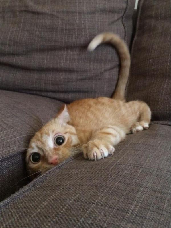 Cute cats being weird