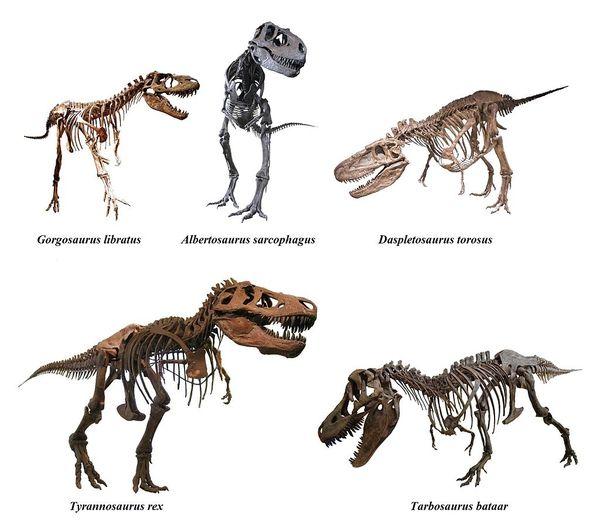Тираннозавриду «подарили» еще один орган чувств Наука, Палеонтология, Меловой период, Интересное, Раскопки, Ископаемые, Динозавры, Длиннопост