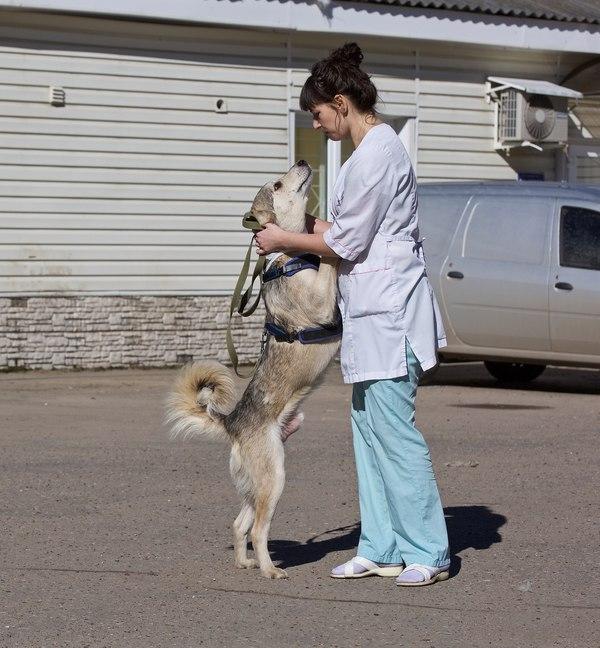 «Муха» или история о собаке, которая очень хотела жить. Собака, Ветеринария, Помощь, Судьба, Жесть, История, Длиннопост, Жизнь