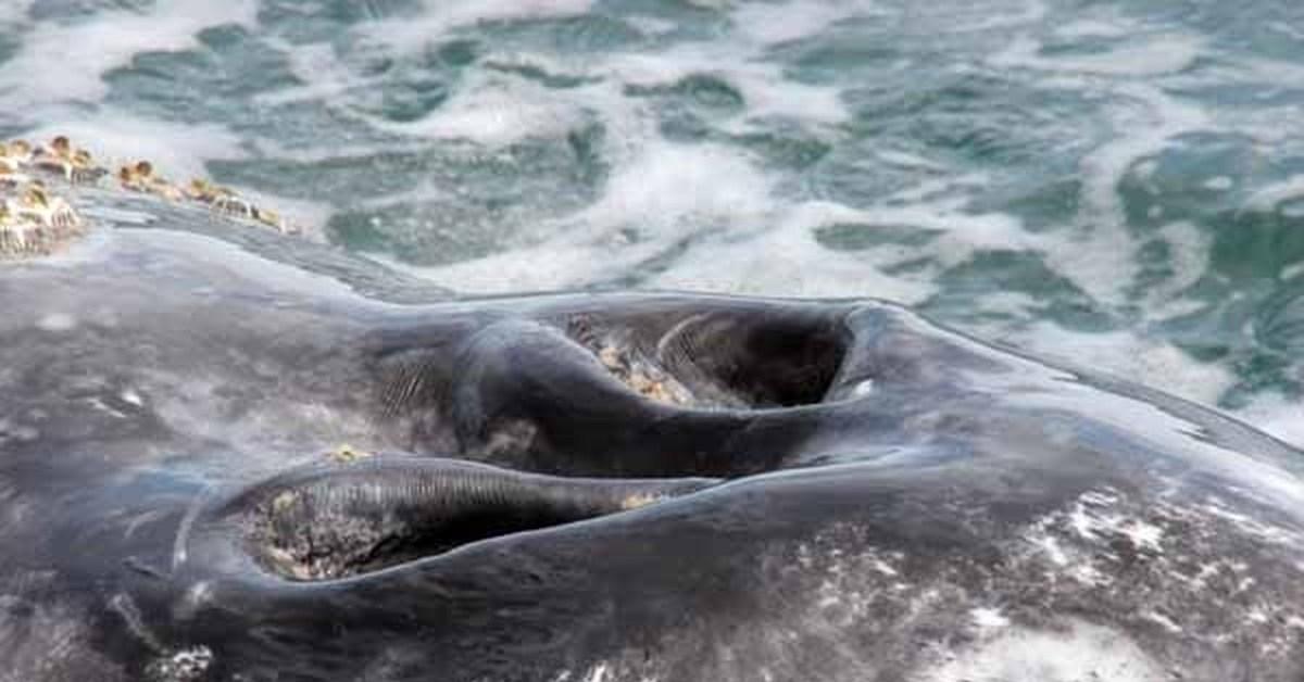 что кит пускающий фонтаны картинка кошек