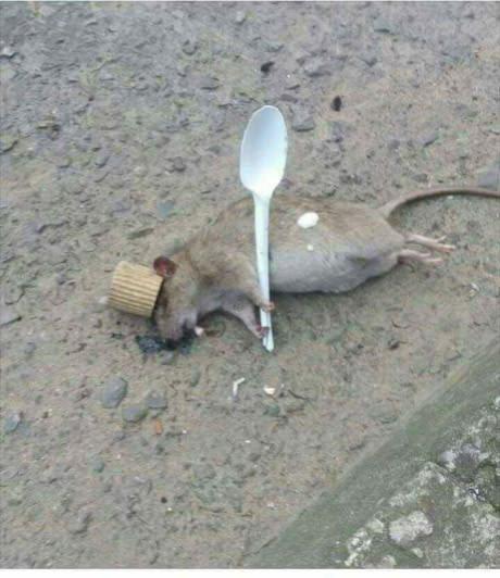 Рататуй в отключке Рататуй, Мышь, Блюдо