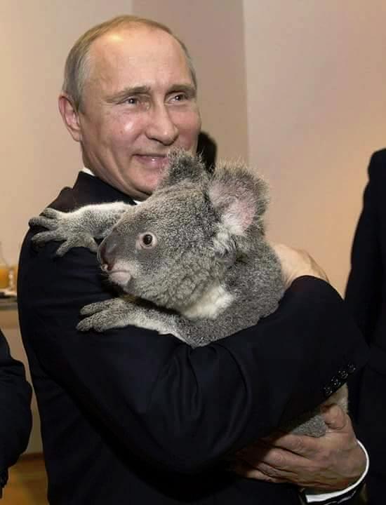 Срочная Новость!!! В.Путин взял в заложники премьер-министра Австралии Не новость, Шутка, Модератор не лютуй, Не политика, Путин
