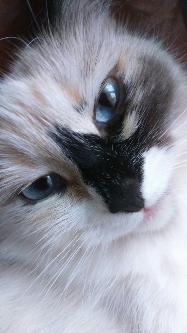 Когда твоя кошка немного Дукалис Кот, Дукалис, Доброта, Одно лицо, Длиннопост