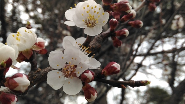 Весна Весна, Цветы, Черепаха, Фотография, Длиннопост