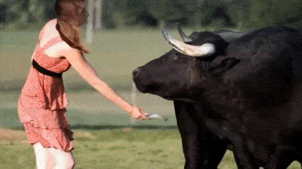 Чистка быка