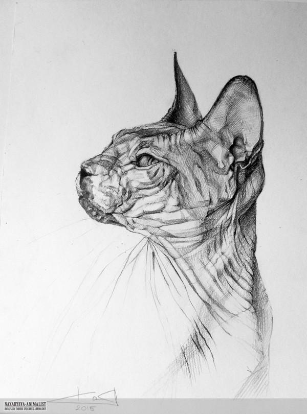Для любителей голых кошек ^_^ Сфинкс, Портрет, Кот, Лысуня
