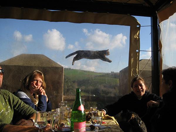 Коты попавшие в кадр Кот, Фотография, Смешное, Длиннопост