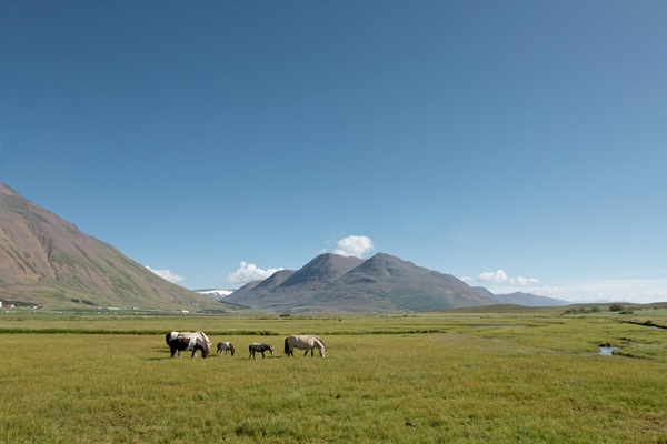Бескрайние луга Исландии