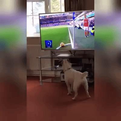 Собакен не понял