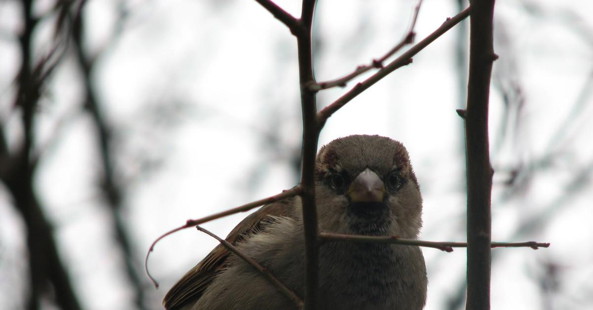 фото птиц воробьев джигиты изготовления гирлянды