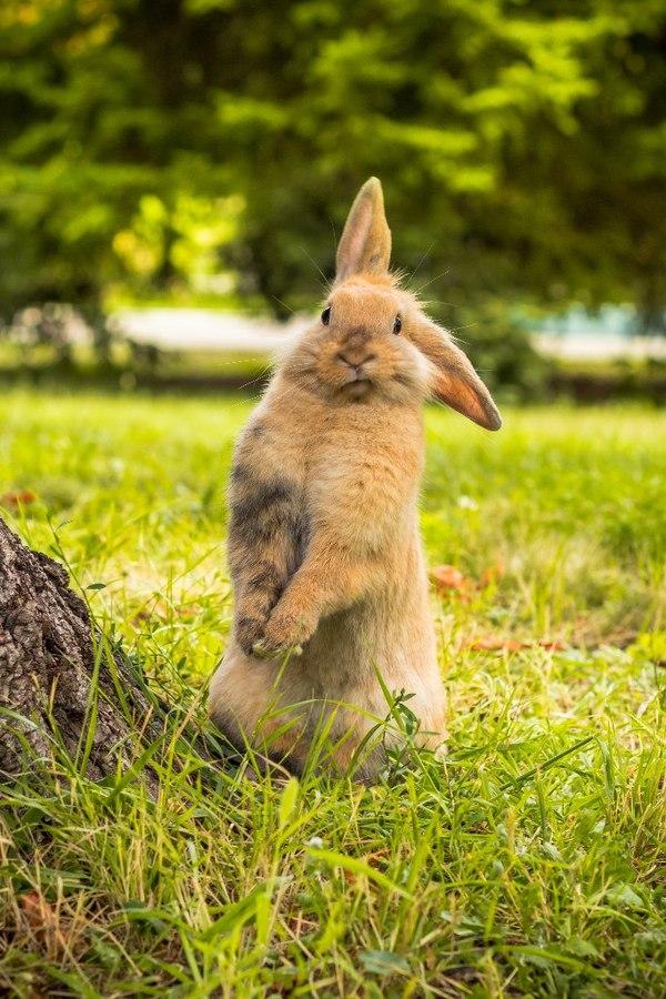 Очень фотогеничная крольчиха :) Кролик, Животные, Милота, Прогулка, Фотография, Длиннопост