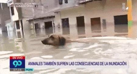 Журналист спас собаку