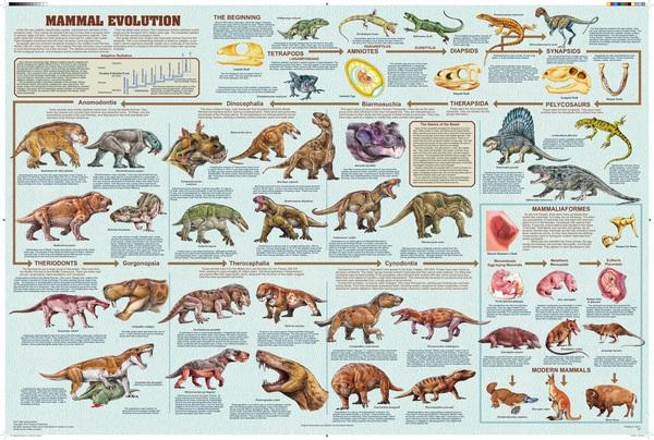 Происхождение сумчатых. Часть вторая. Интересное, познавательно, Эволюция, сумчатые, конвергенция, наука, палеонтология, ископаемые, видео, длиннопост