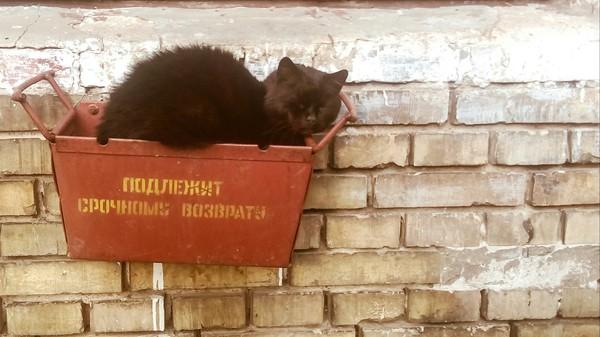 Подлежит возврату Срочный, возврат, кот