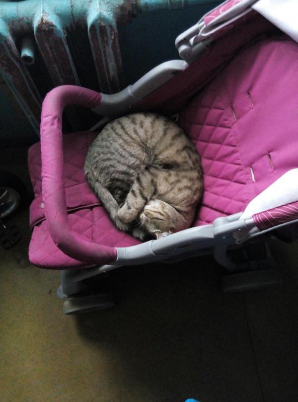 Кошка кот, Коляска, подъезд, длиннопост, милота