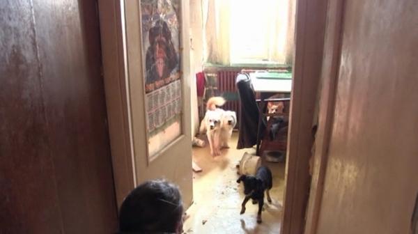 Псиная мать. В этот раз ее соседям повезло. Оренбург, добрые соседи, защита животных, бродячие псы, психиатрия, видео, Собака
