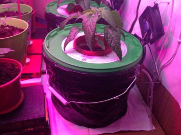 Как я сделал гидропонику DWC Гидропоника, dwc, растениеводство, growing, длиннопост