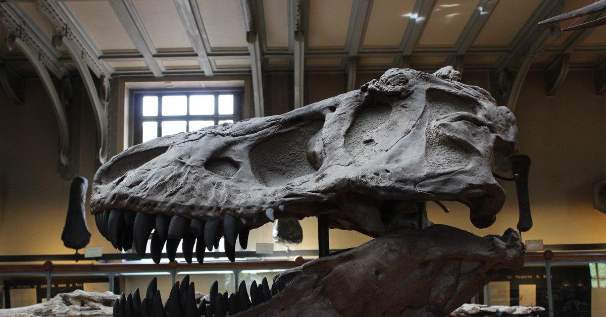 Музей палеонтологии в санкт петербурге фото