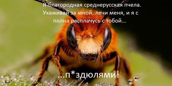 """Ч. 2: """"Какая разница в этих мухах, и в каких коробках их содержать"""". пчеловодство, пчелы, свое дело, пасека, длиннопост"""