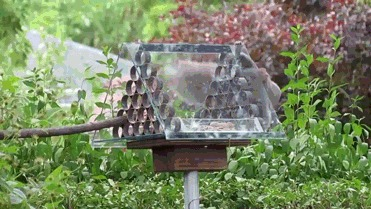 Кормушка для птиц с защитой от белок