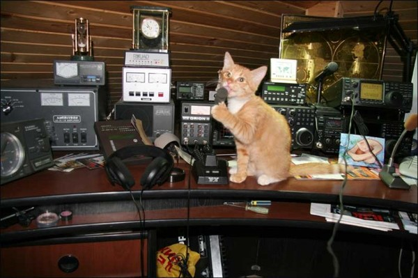 18 апреля 2017 года - Всемирный день Радиолюбителя!!! радио, радиолюбители, хобби, кот