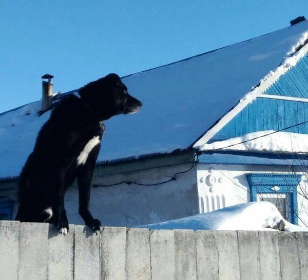 Кошечка на заборе. кот, забор, Собака, зима, Оренбург