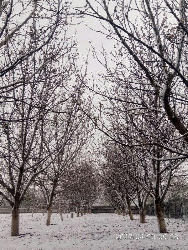 Немного апрельской Одессы вам в ленту весна, Снег, одесса, зима