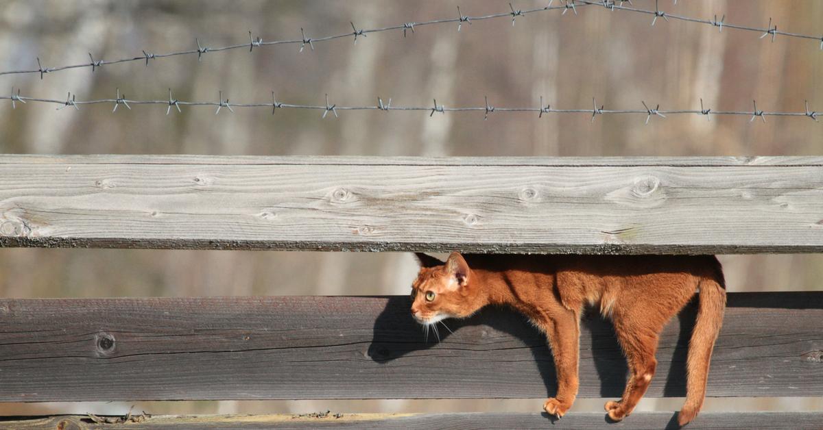 можно выявить гифка кот на заборе прекрасный алый цветок