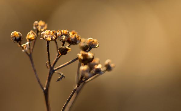 Макро-весна Макро, canon 600D, 100mm, Мох, почки, листочки-цветочки, длиннопост