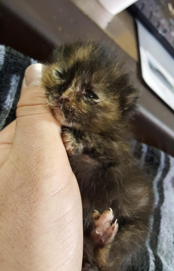 """""""Ничего себе деталька!""""- удивился механик... кот, новорожденный котенок, деталька, история спасения, длиннопост"""