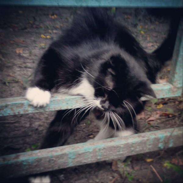 Фотоохота. Чертановские кошки :) кошки и котята, фотография, хобби, кот, длиннопост