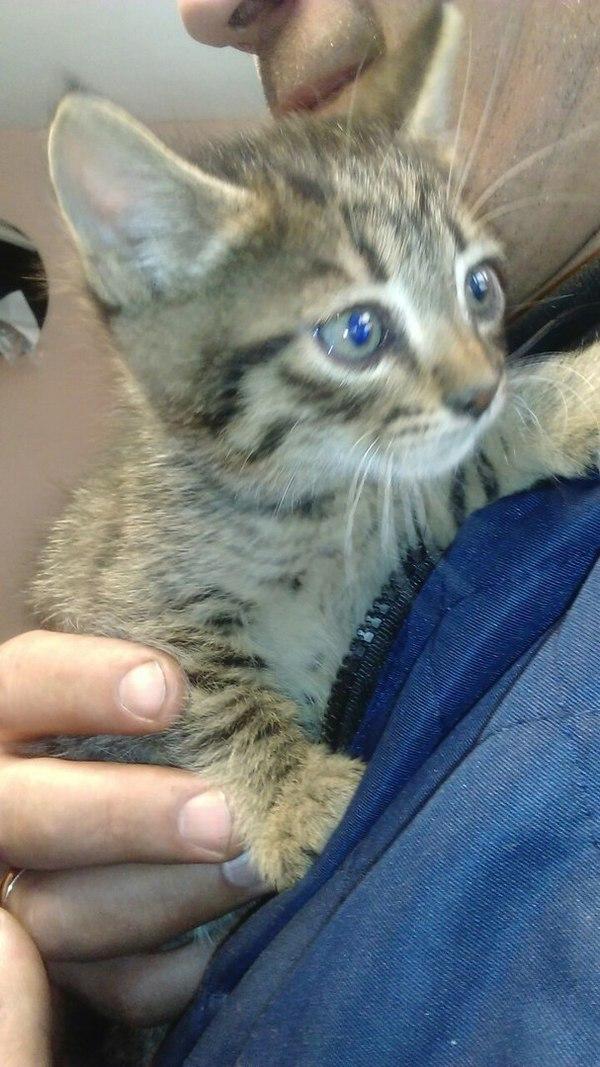 Маленький котик. Московская обл. Балашиха Помощь, в добрые руки, кот, отдам в хорошие руки, кошки и котята, доброта, длиннопост