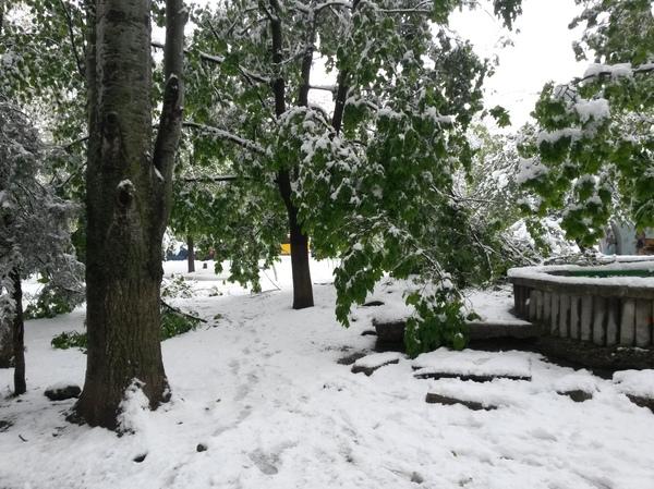 Кишинев после апрельского снега Кишинев, Весна, Снег, Длиннопост