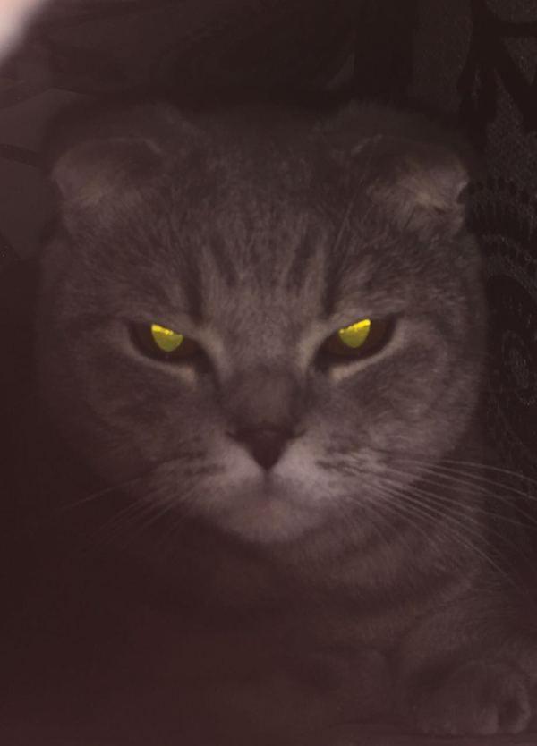 Хотел сфотографировать кота, а получился постер к фильму ужасов.
