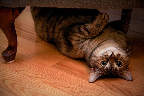 Агрессивный кот... кот, история, жизнь, жизненно, Животные, любите животних
