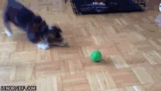 Нашёл в себе смелость и облаял зелёный шарик