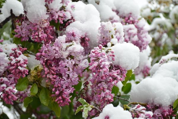 ...о погоде в Крыму сегодня Крым, весна, погода, катаклизм, снег, я в шоке, длиннопост