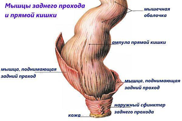 Во время секса произошол спазм мышцы влагалище
