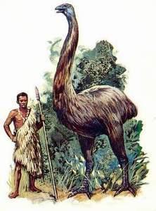 Моа, гигантская бескрылая птица прошлого... Моа, Палеонтология, Факты, Познавательно, Моё, История, Длиннопост